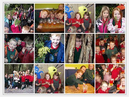 Ysgol Gynradd Llanllechid School